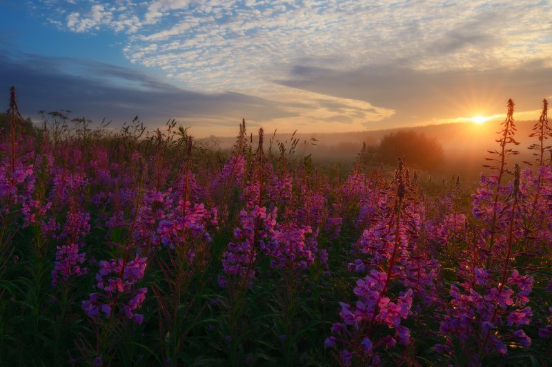 солнце, облака, деревья, иванчай, рассвет, солнце, небо, лучисолнца, июль, лето Повсюду блеск, повсюду яркий свет.photo preview