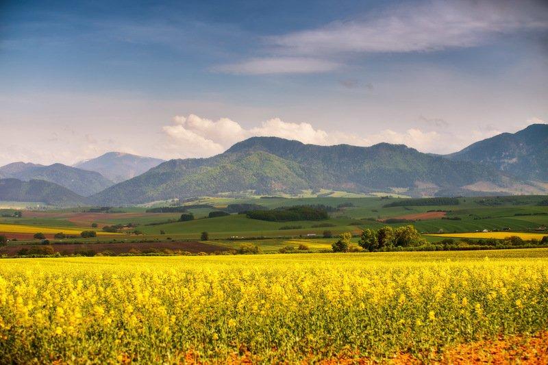 апрель, весна, горы, европа, луга, поля, рапс, словакия, татры Апрель в Словакииphoto preview