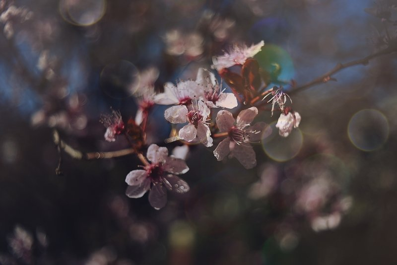 Springphoto preview