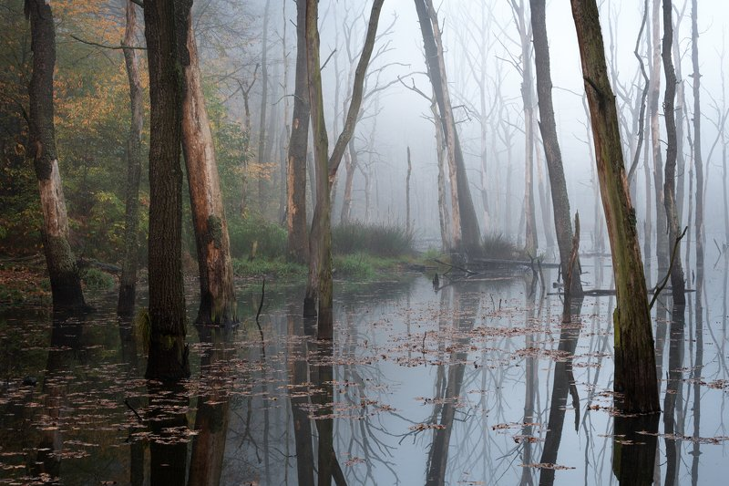 swamp, landscape, nature, water, tree, The swampphoto preview