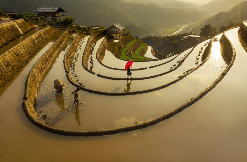 Terrace in Water fall season in Mu Cang Chaiphoto preview
