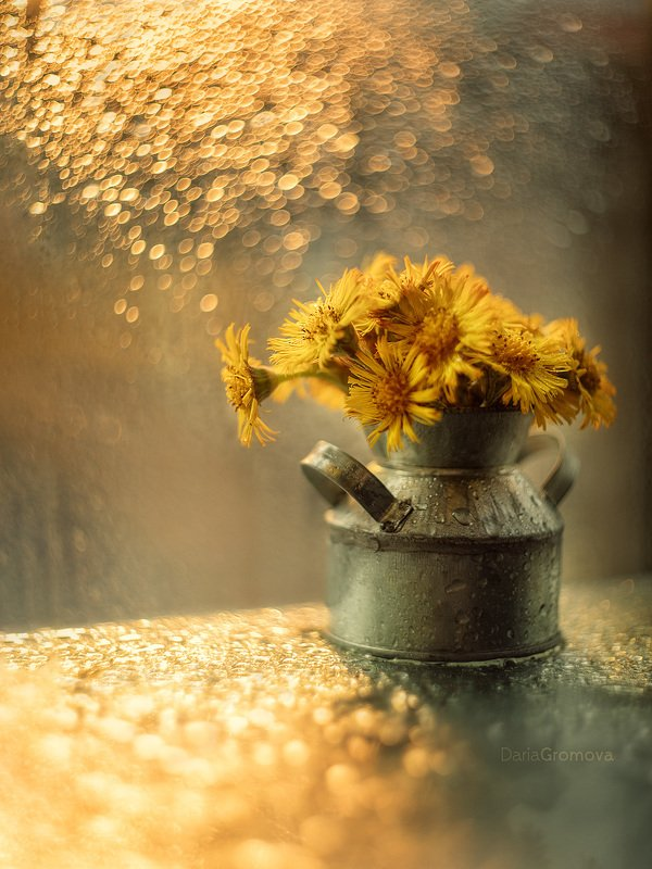 цветы, боке, натюрморт, дарья громова, фотография, фото, фотоарт, фотограф, закат Веснаphoto preview