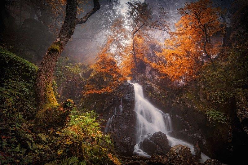 bulgaria,vitosha,autumn,fog photo preview