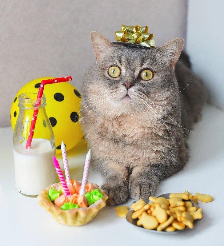 Birthday Catphoto preview
