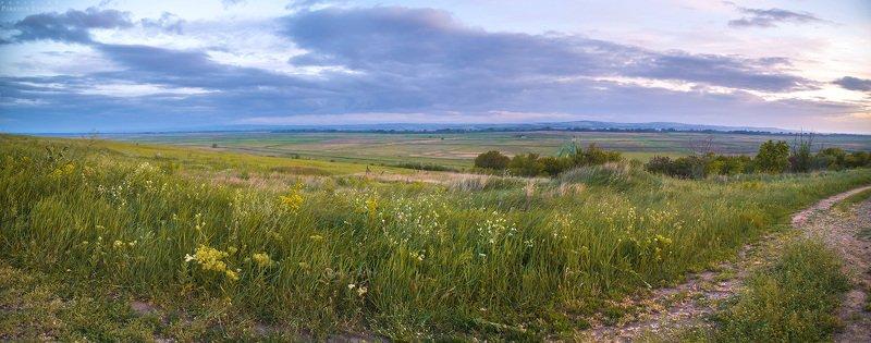 родные, просторы, поле, трава, небо, панорама, темрюк Родные просторыphoto preview