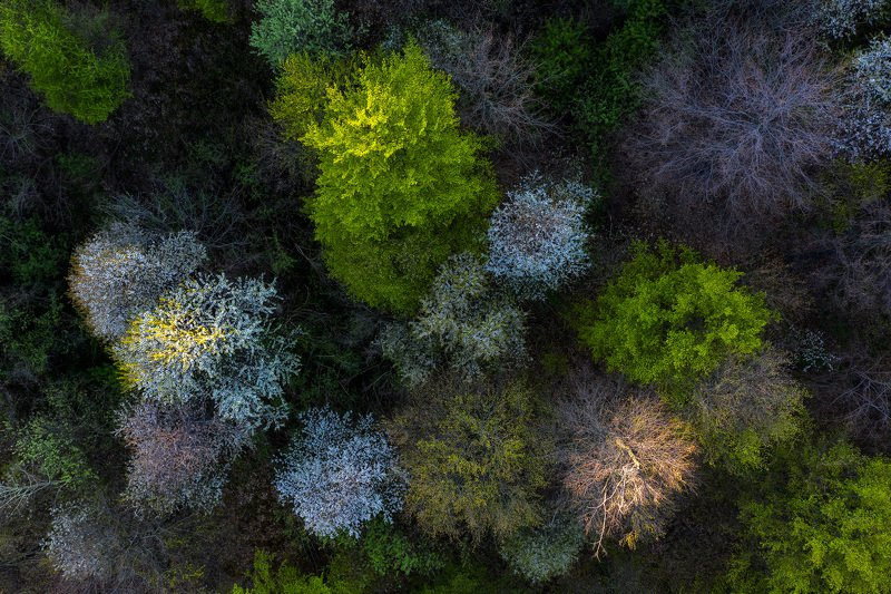 #nature, #aerial, #forest, #green, #romania, #springtime Spring colorsphoto preview