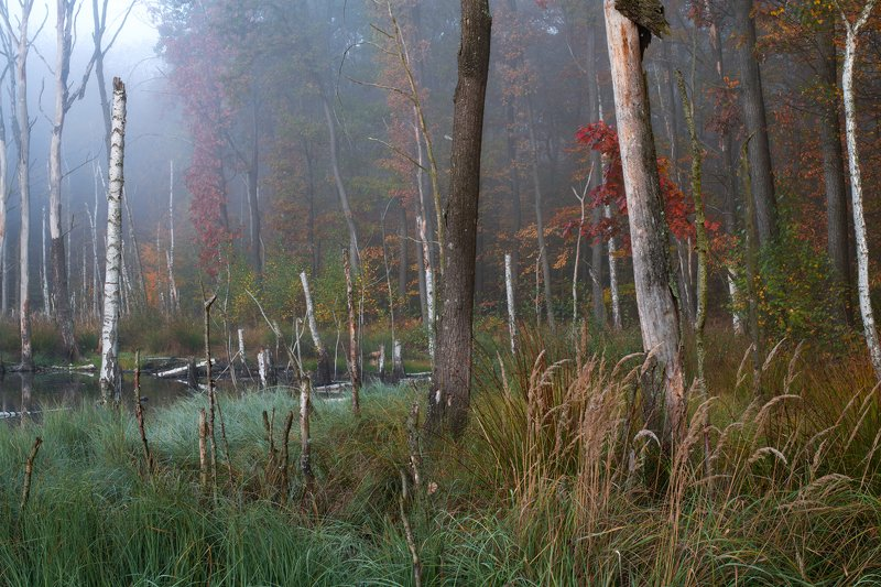 swamp, nature, fog, foggy, landscape, forest, water, autumn mysterious morning in the swampphoto preview