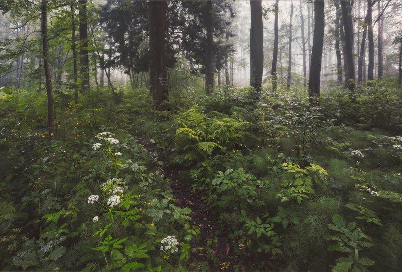 природа, царскоесело, царское, питер После ночного дождя. . .photo preview