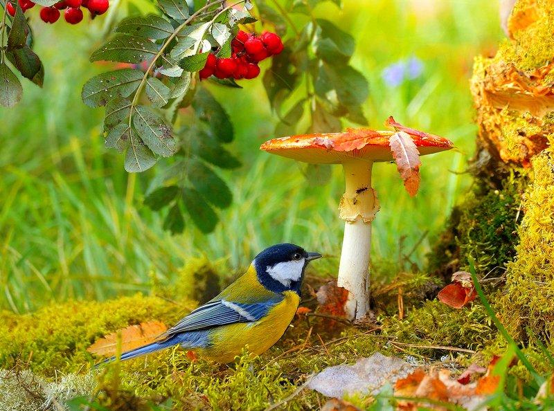 природа, фотоохота,  птицы, животные, осень, грибы, синица, лес В осеннем лесуphoto preview