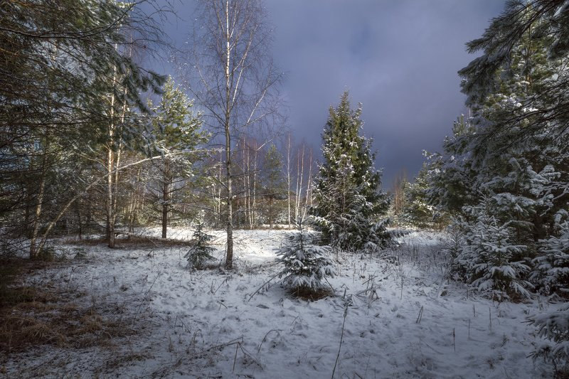 весна,лес,снег,свет,небо,тучи зима вернуласьphoto preview