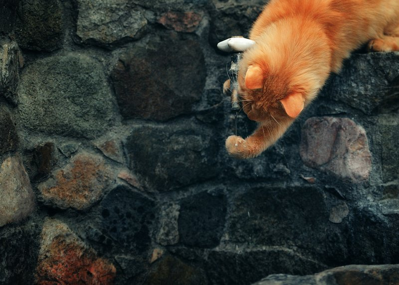 кот, вода, кран Моем рукиphoto preview