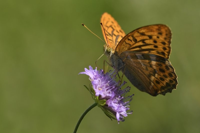 бабочка  butterfly бабочкаphoto preview