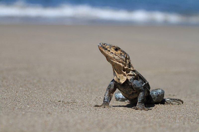 costa rica Зверушки Коста Рикиphoto preview