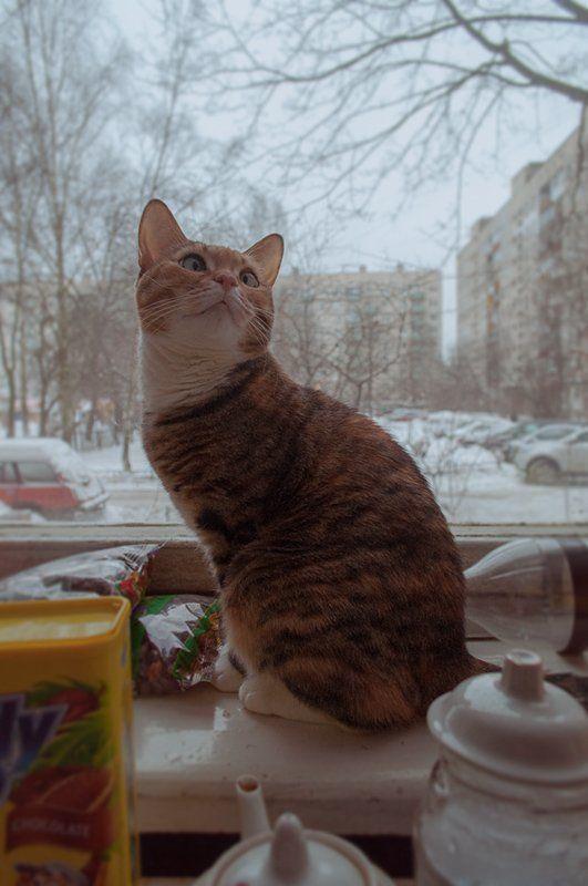 кошка Мотяphoto preview