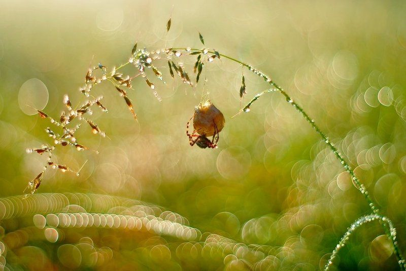 meadow\'s magic..photo preview