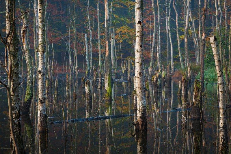 morning, autumn, nature, landscape, reflections, forest, colors, утро, осень, природа, пейзаж, отражения, лес, цвета, Autumn morningphoto preview