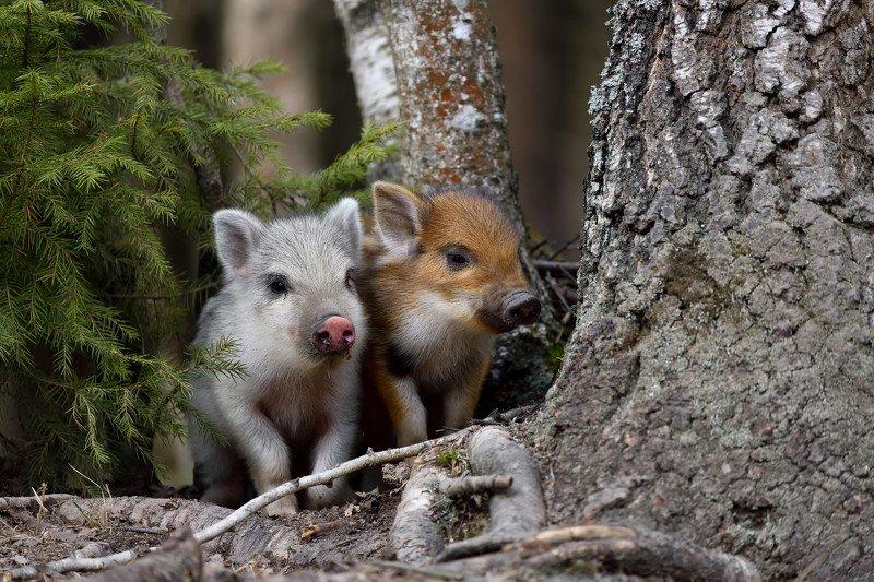 лес,весна,животные,природа в засадеphoto preview