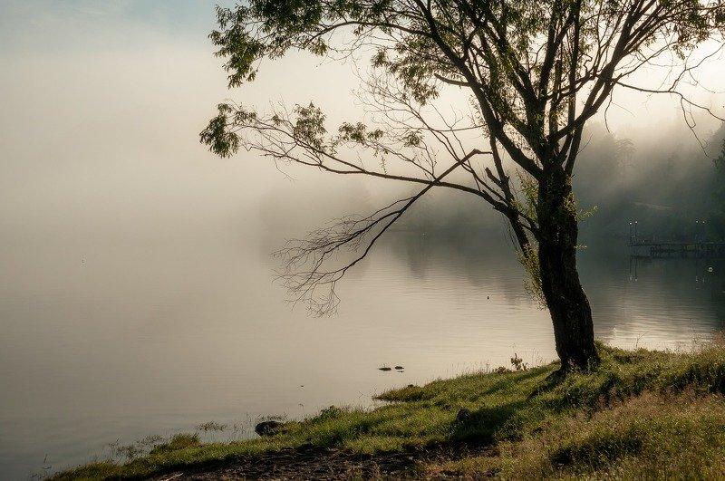 Туман, Телецкое озеро. С рассветом.photo preview