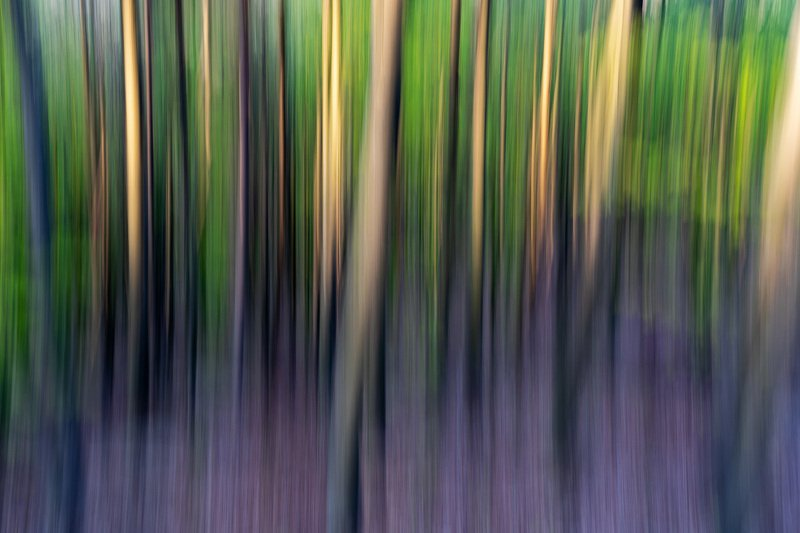 #nature, #abstract, #icm, #forest, #sony, #beauty, #spring, #colors Silhouettephoto preview
