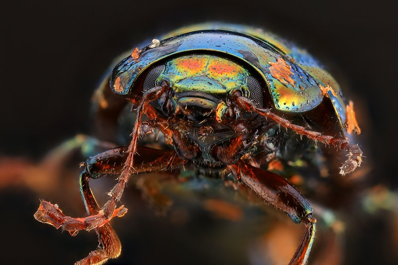 супермакро макро жук photo preview