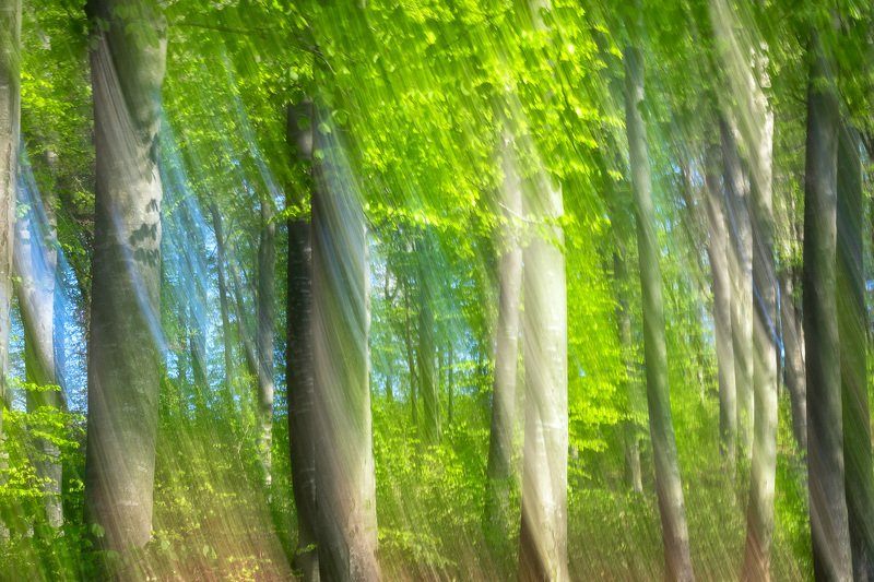 #nature #abstract #icem #forest #freshgreen #panning #silhouette  Springtime dreamphoto preview