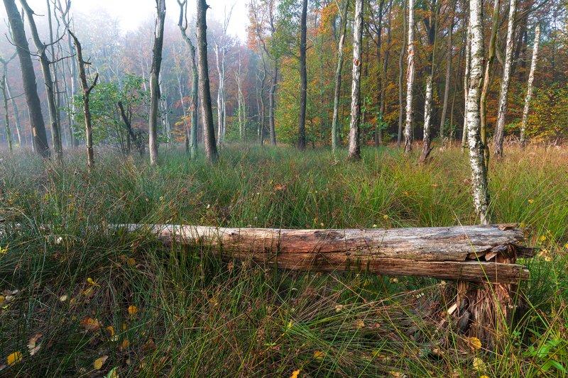 nature, forest, autumn, landscape, colors, morning, foggy, природа, лес, осень, пейзаж, цвета, утро, туман, Autumn in forestphoto preview