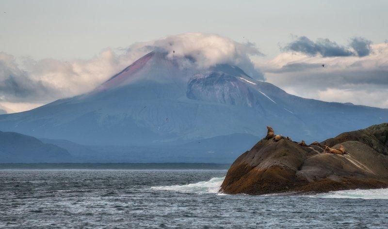 камчатка, тихий океан Камчатка. Тихоокеанское побережье.photo preview