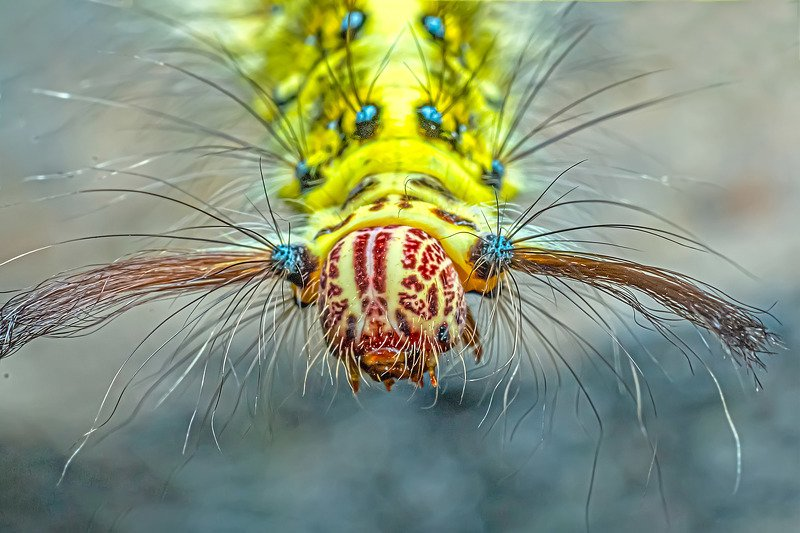 insect, macro, close up, beauty, beautiful, yellow, feather, leaf, bug, butterfly, small photo preview