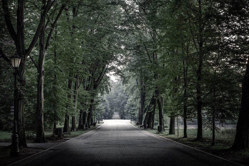 nature, forest, park, pszczyna, nikon Dark alleyphoto preview