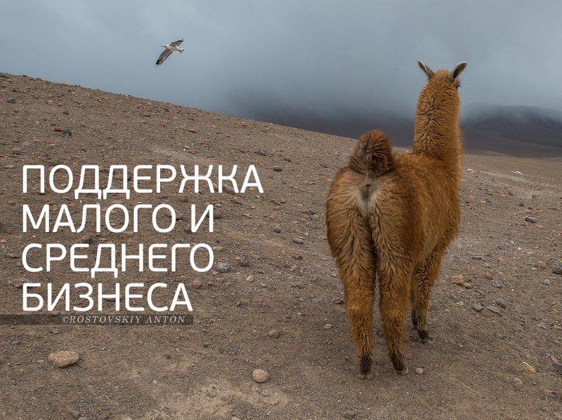 Боливия, фототур, лама, альпака, юмор, К нам повернулись лицом)photo preview