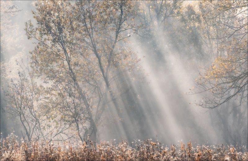 карпаты, осень, утро, закарпатье, beautiful карпати, мертвий півень, межгорье, синевир, ясиня, лазещина, изки Beautiful Карпатиphoto preview