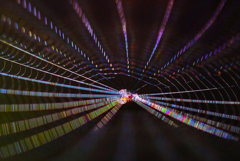 паук, паутина, свет, цвета Расширяющееся пространствоphoto preview