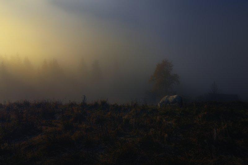 горы, осень, туман, лошадка Начинался день.photo preview