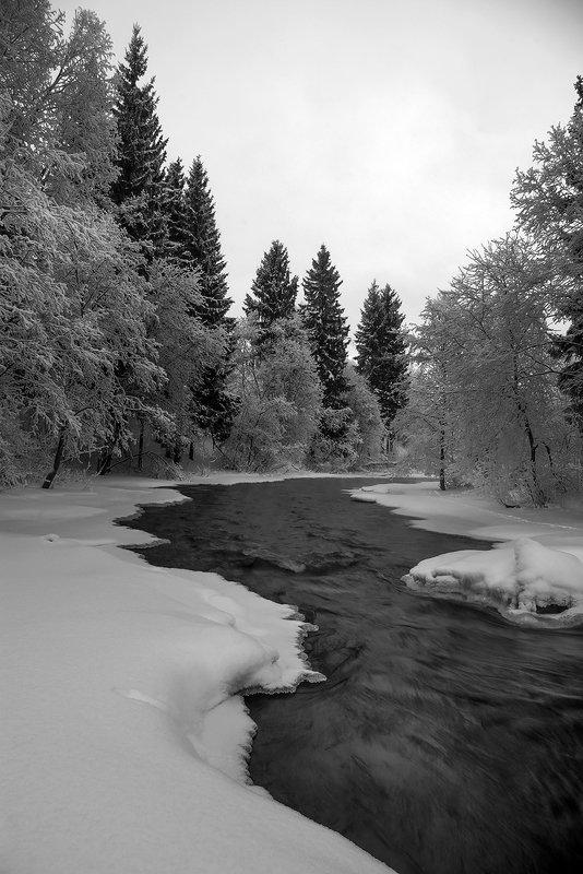 карелия Река  и ёлкиphoto preview