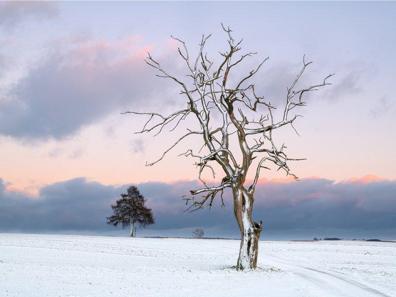 tree, nature, landscape, winter, snow Treephoto preview