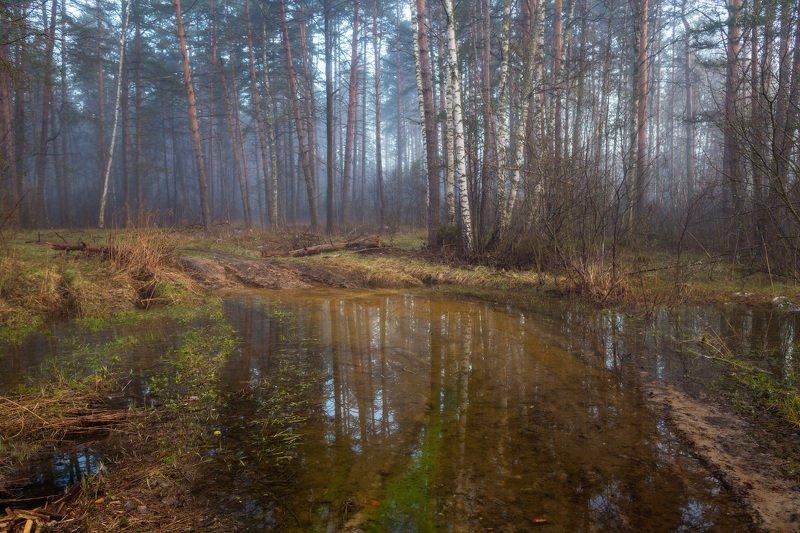 утро туман лес дорога вода Не проехать, не пройтиphoto preview