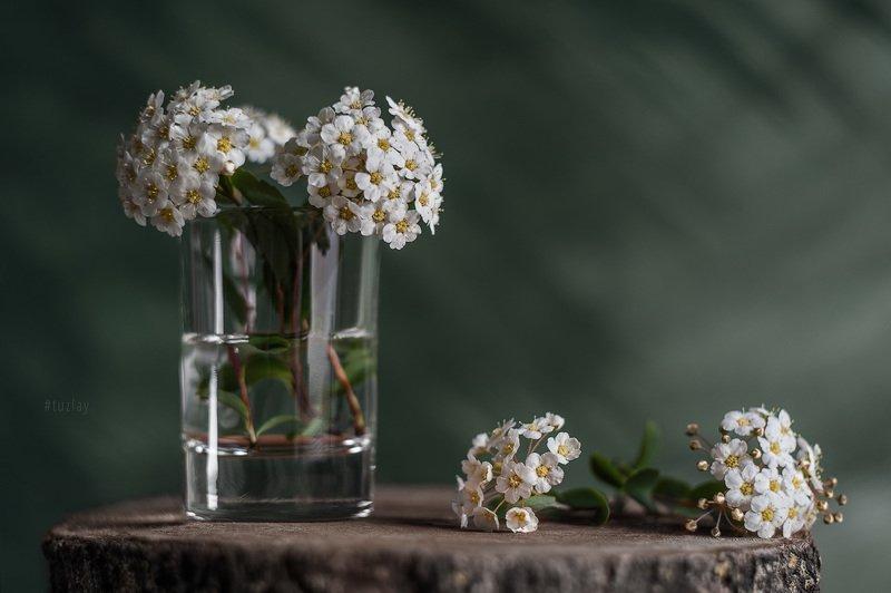 спирея, невеста, листки спиреи, цветок спиреи, невеста в стакане, весна в стакане, пень Про \