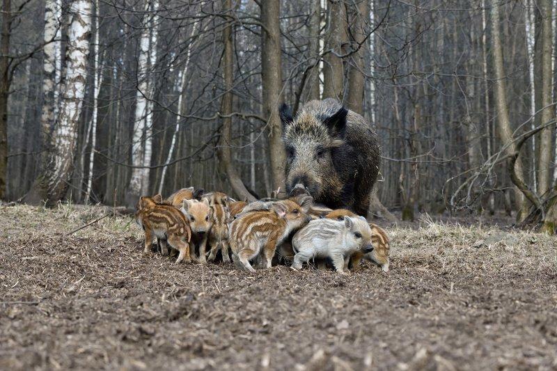 лес,весна,животные все мои на местеphoto preview
