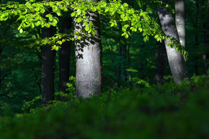 #nature #green #forest #stayhome #hardlight #springtime #beauty Fresh greenphoto preview
