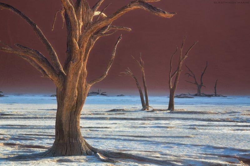 намибия, пустыня, песок, соль, глина, дюны, солнце, дерево, рассвет, озеро, африка, южная, высохшее, Намибия, Namibia, desert, sand, dune, sunrise, trees, lake Стражи пустыниphoto preview