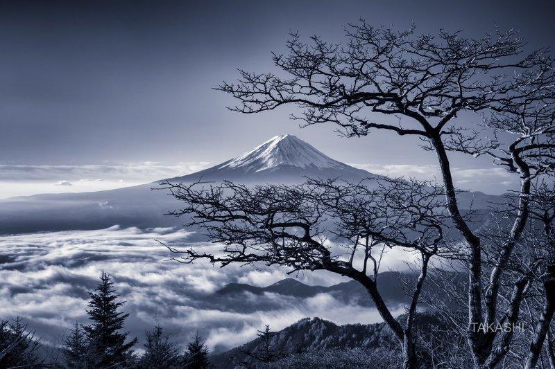 Fuji,Japan,mountain,clouds,tree,bonsai,snow,blue The spirit of the treephoto preview