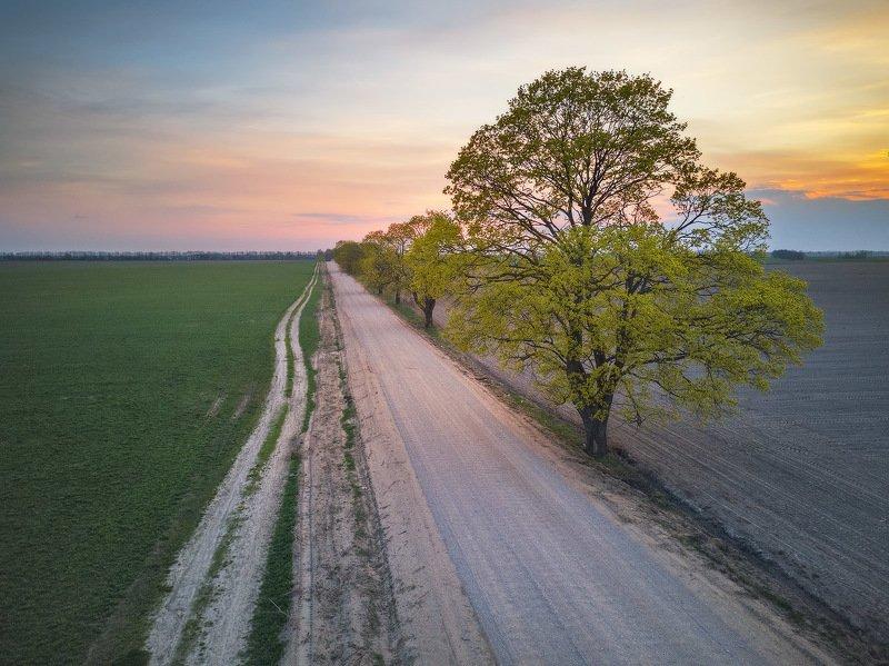 2020, апрель, беларусь, весна, вечер, дорога, закат, минск и окрестности Апрель. Вечерняя дорогаphoto preview