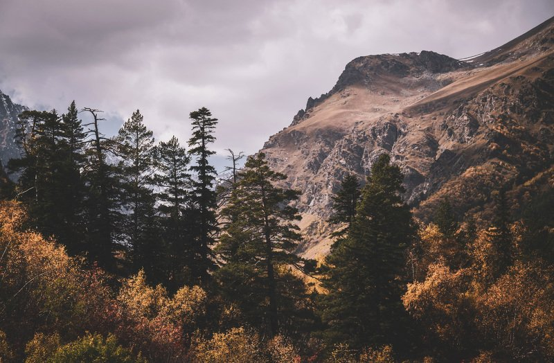 autumn mountains forest spruce landscape nature Autumn in Dombay.photo preview