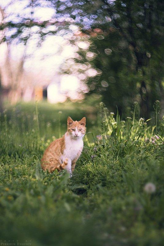 апрель, кот, рыжий кот, темрюк, весна Апрельский котphoto preview