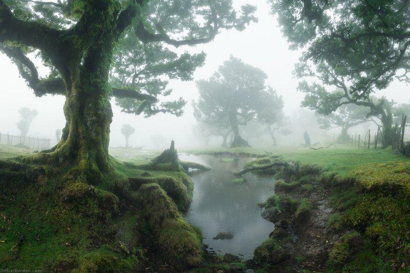 Fanal Laurel forest фото превью