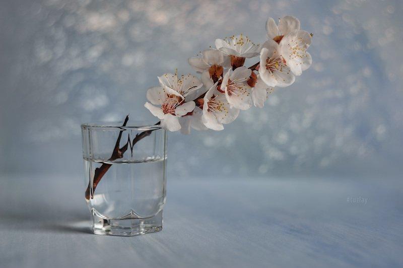 цветки абрикоса, гелиос, боке Про мартовское, абрикосовое...photo preview