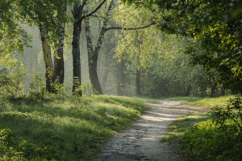 пейзаж,природа,утро,рассвет,весна,красота \