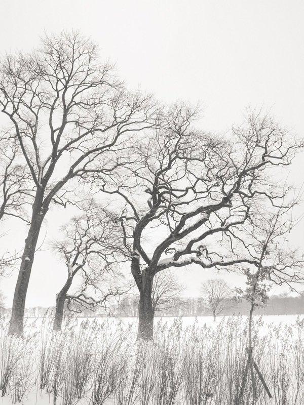 чёрно-белое, графика, петергоф, александрия Во власти зимыphoto preview