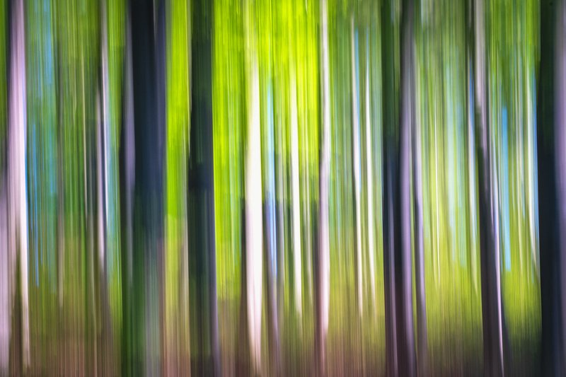 #icm #nature #springtime #natural light #forest #colors #abstract #silhouette Silhouette  IIphoto preview