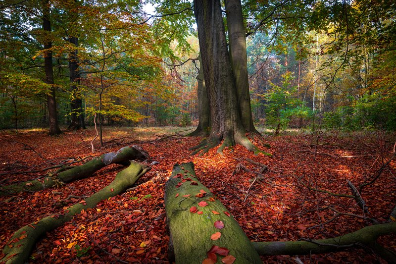colors, landscape, nature, trees, wood, autumn, poland Colors in the forestphoto preview